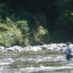 伊南川本流で鮎釣り