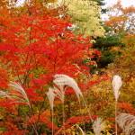 紅葉 見頃10月~11月上旬